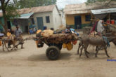 A similar story of people moving from rural areas in Gedo, southern Somalia to town centres as the drought continues bites. November 28, 2016|Photo: Goobjoog News