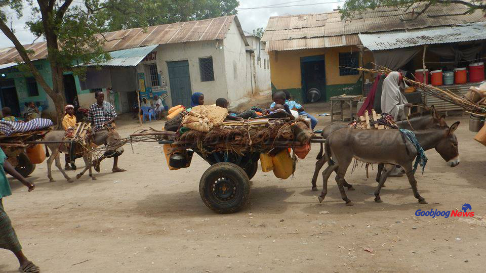 A similar story of people moving from rural areas in Gedo, southern Somalia to town centres as the drought continues bites. November 28, 2016 Photo: Goobjoog News
