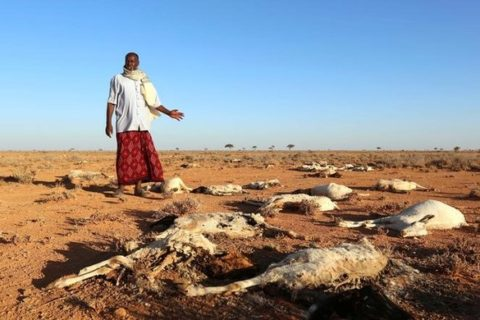 An internally displaced man looks at the carcasses of his goats and sheep in the outskirts of Dahar town of Puntland state in northeastern Somalia, December 15, 2016. REUTERS/Feisal Omar
