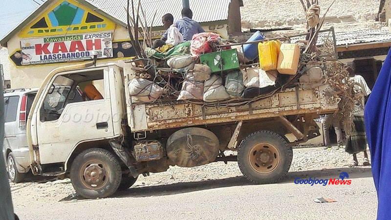 Dad ka qaxaya abaaraha, Sool, Somaliland. November, 28, 2016. Sawirka Goobjoog News