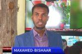 Bishaar